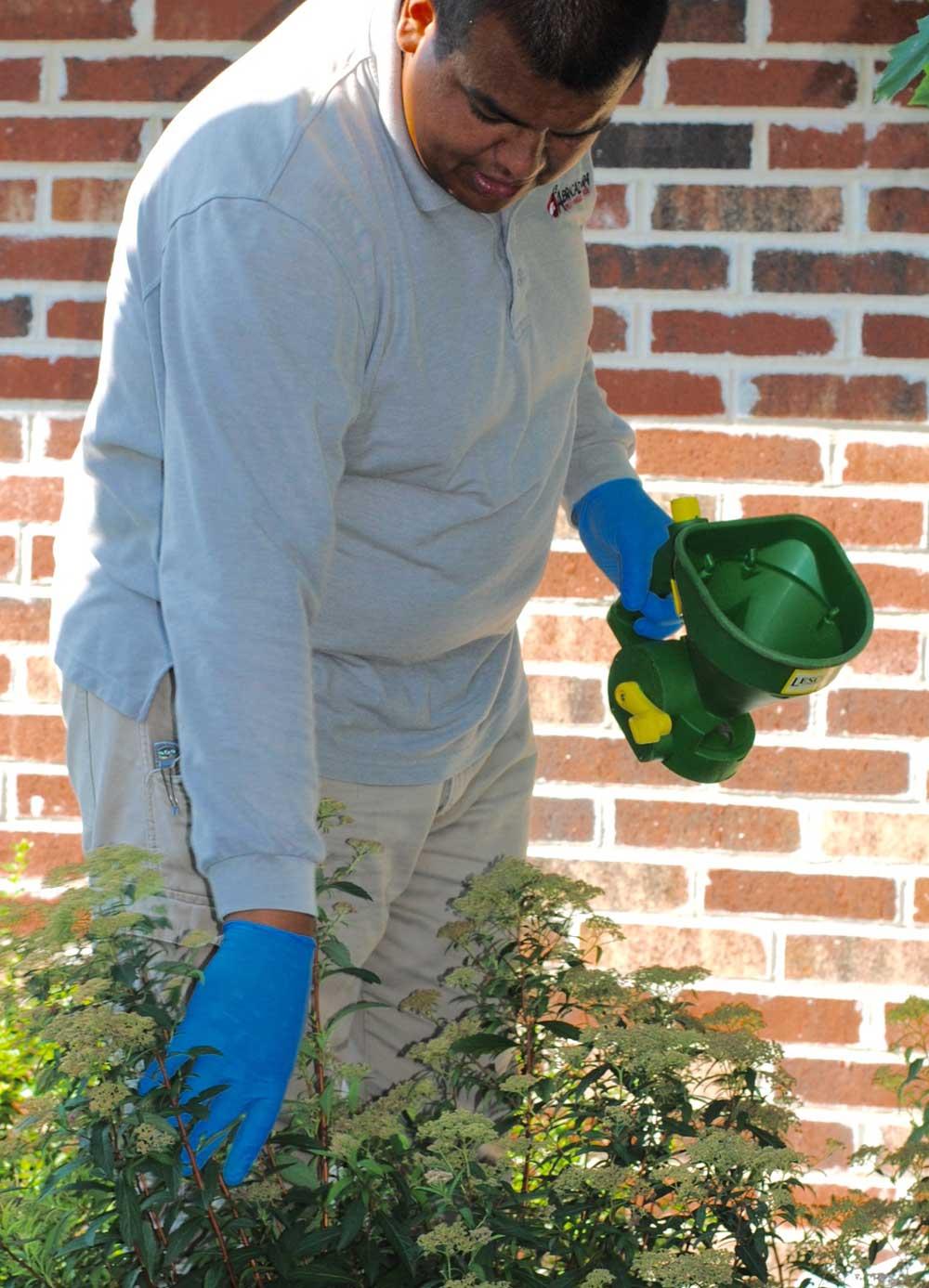 ornamental bush shrub care dallas