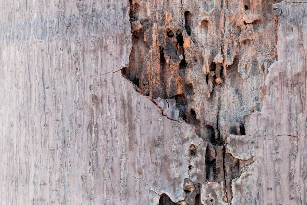 termite control dallas