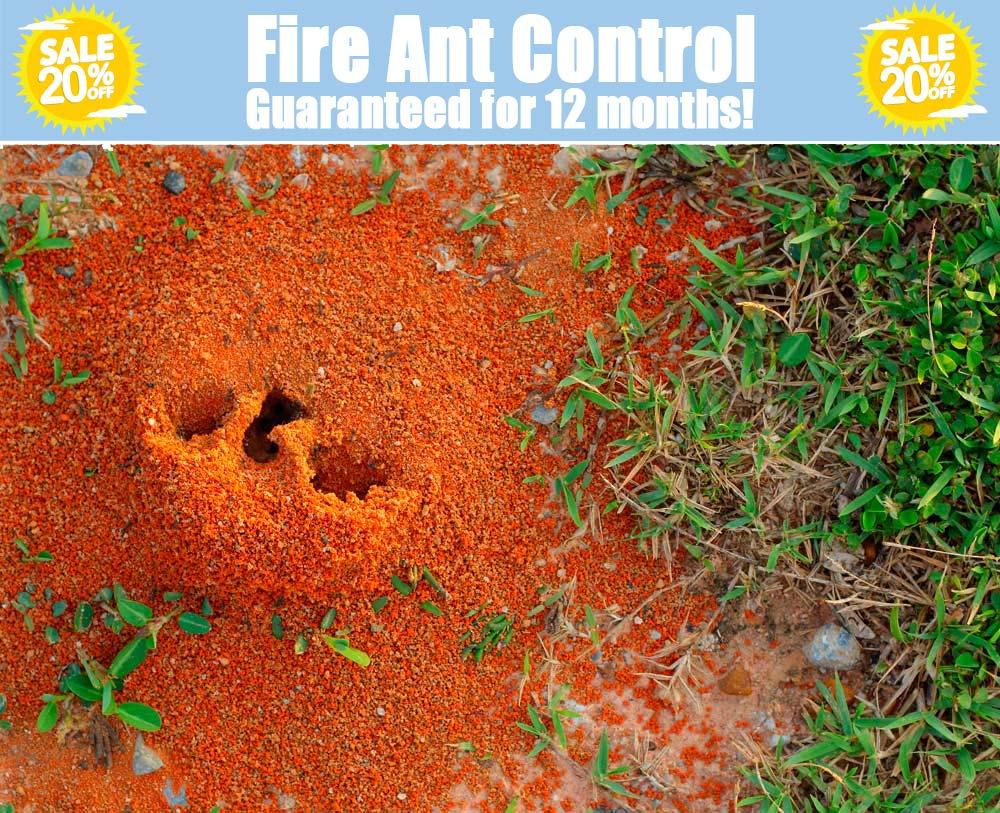 fire ant control dallas texas
