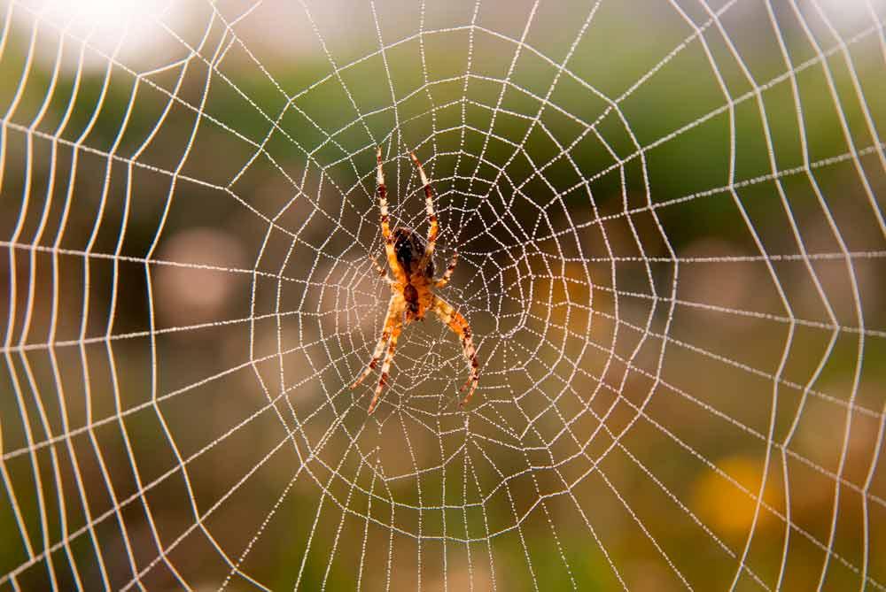 spider control dallas