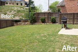 drought tolerant lawn denton county tx