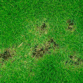 lawn disease control denton county texas