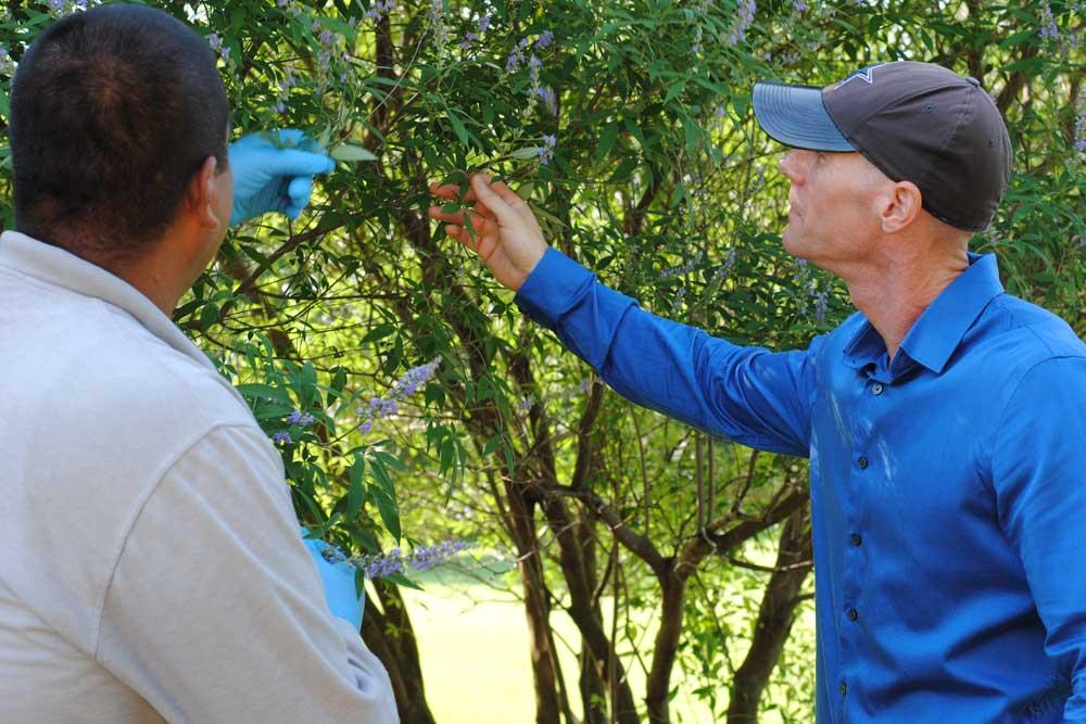 ornamental tree and shrub care dallas